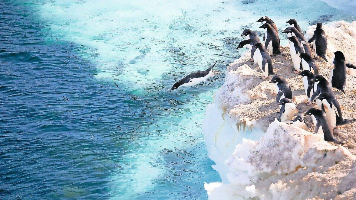 Welt Pinguin Tag 2020
