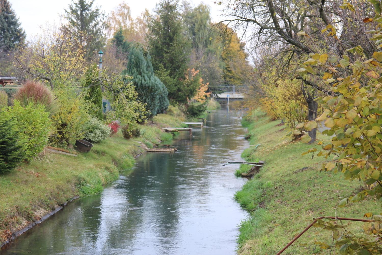 Heimatgeschichte: Gesucht: die Quelle der Rainitza bei Senftenberg - Lausitzer Rundschau