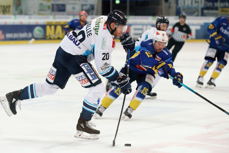 Dresden Eishockey