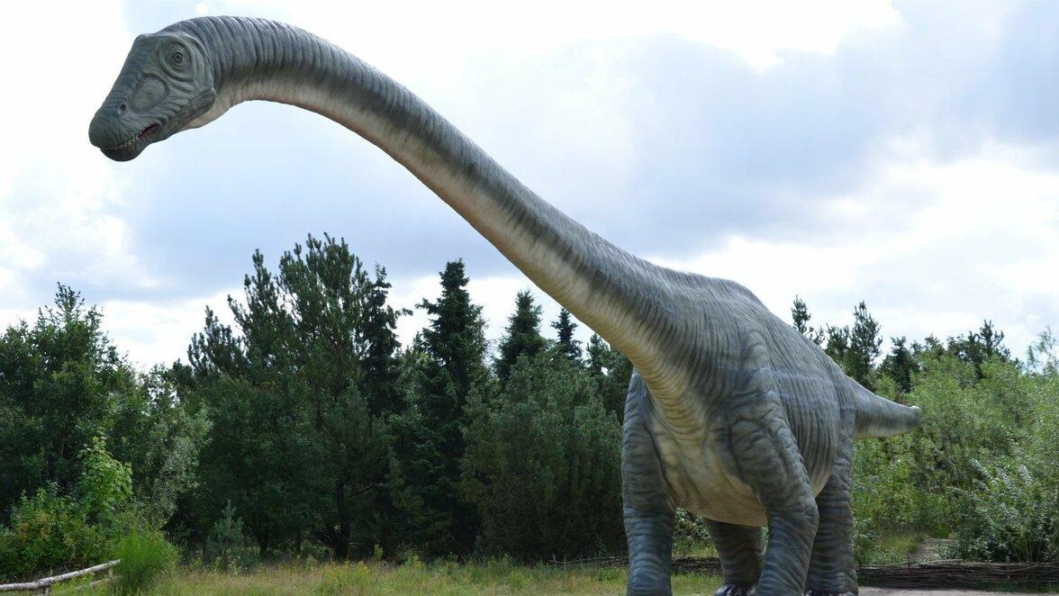 Warum Wurden Dinosaurier So Groß